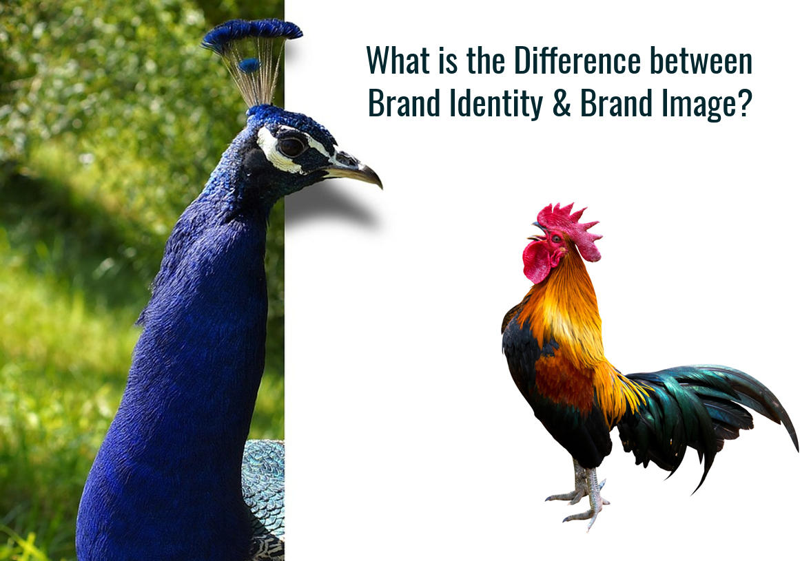 What is the difference between Brand Identity & Brand Image?